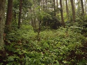 八幡神社北の堀切