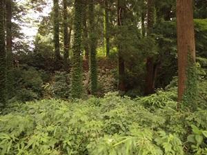 関川館の土塁と堀
