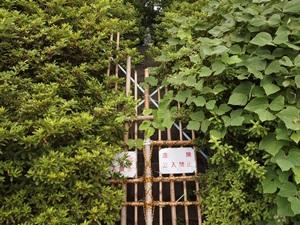 平城中門跡の石垣