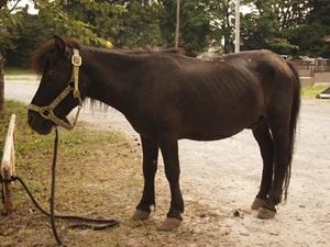 中村城の馬