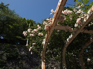 盛岡城のバラ2