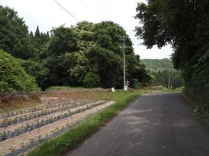 堀底を通る車道