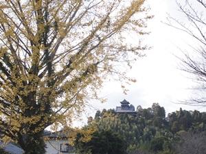 銀杏と綾城