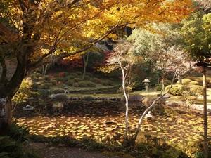 永国寺の庭園