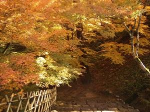 御下門上の登城路の椛