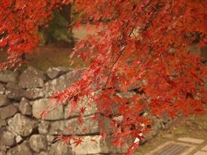月見櫓跡の紅葉